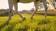 SLO MO Riding horse in meadow video