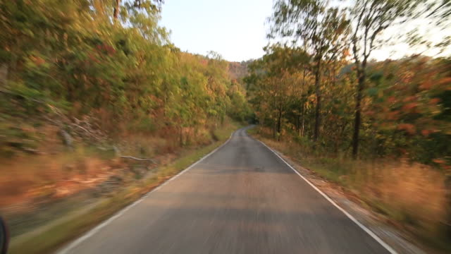 Riding on Road in forest video