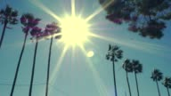 Right-Left PanPalm Trees with Sun Behind on Windy Day video