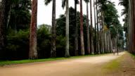 Rio de Janeiro's Botanic Gardens video