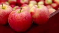 Ripe Organic Gala Apples video
