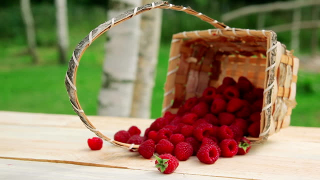 Ripe raspberries scattered from the basket on the table video