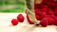 Ripe raspberries video