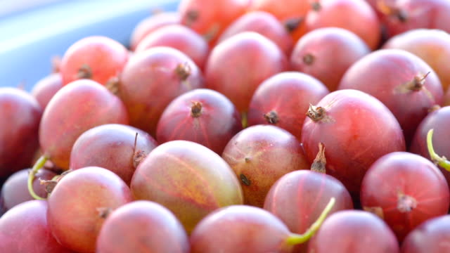 ripe red gooseberries, close up video