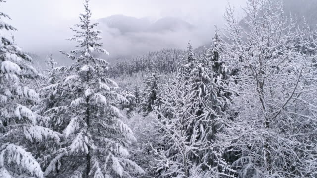 Rising Aerial on Frozen Winter Landscape of Foggy Snow Covered mountain Forest video