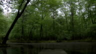 Rising shot on Pond video