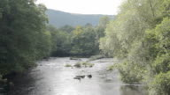River Dee In Late Summer video