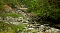 River flowing in a forest. HD 1080i video
