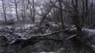 River Flowing thru Winter Forest video