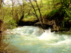 River in forest. video