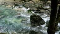 River in the rainforest in Cebu Philippines video