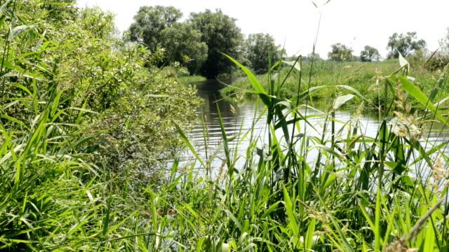 river landscape on Havel (Brandenburg) video