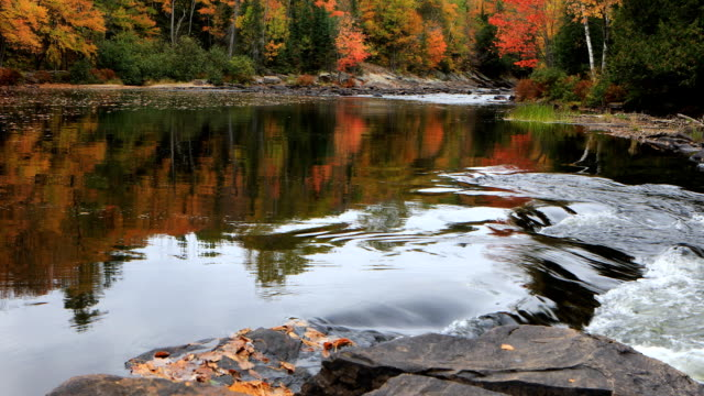 River rapids in Algonquin in autumn video