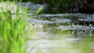 River Reed - Stock Footage video