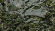 river seaweed video