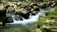 River stream in the tropical forest video
