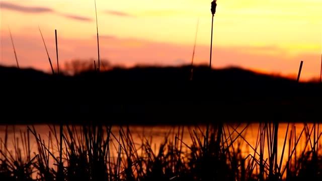 river sunset video
