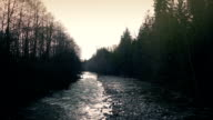 River Through Forest At Dusk video