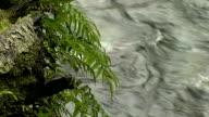 River #3 video