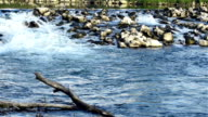 river waterfall with rocks and submerged trunk video