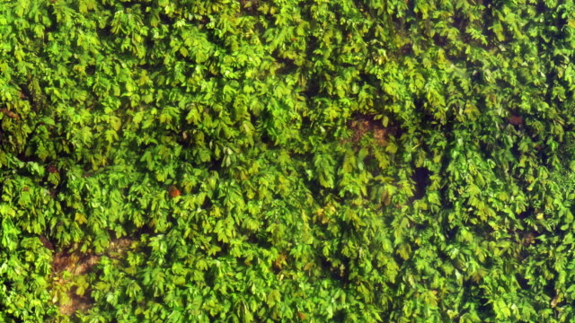 River with Aquatic Plants, Normandy, Real Time 4K video