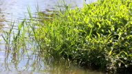 Riverside plants video