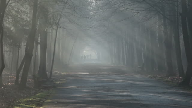 Road and sunbeams in strong fog, the forest, Poland. video