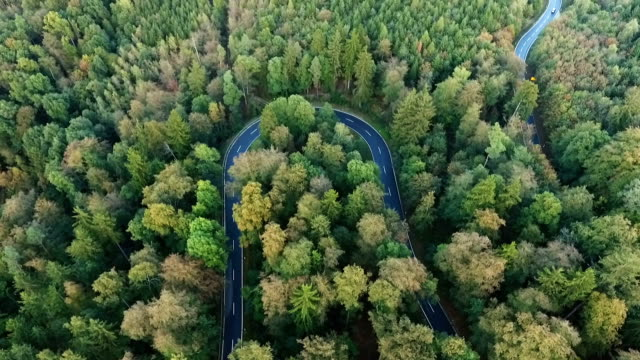 Road curve in the forest video