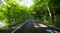 Road in a green forest video