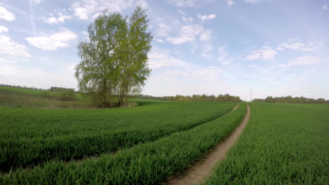 Road in wheat field, time lapse video