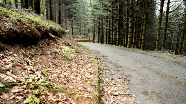 Road in woods forest trees nature slide dolly video