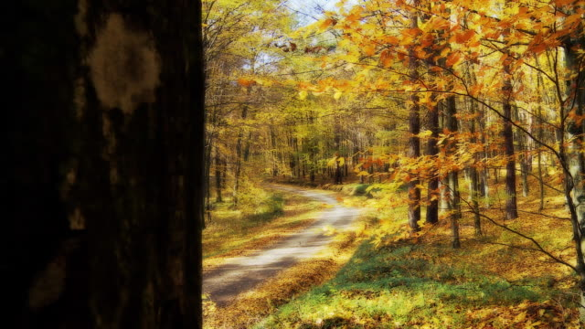 HD DOLLY: Road Leading Through A Forest video