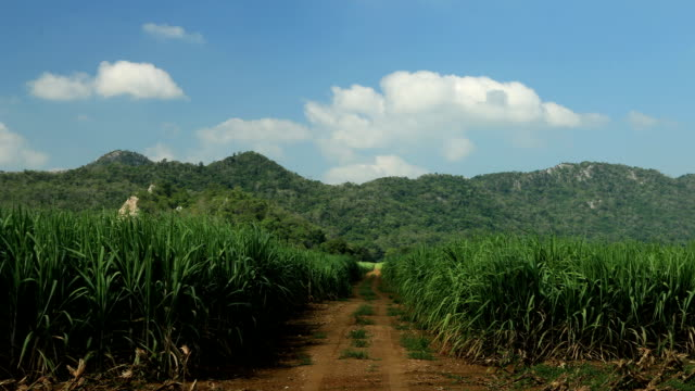 Road on sugar cane field, Cloud running background, time lapse clip. video