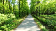 HD HELI: Road Through A Green Forest video