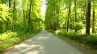 HD: Road Through A Green Forest video