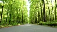 HD CRANE: Road Through A Green Forest video