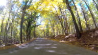 Road through mixed forest, GoPro video