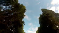 Road with Cypress trees video