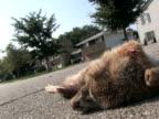 Roadkill Drive-By video