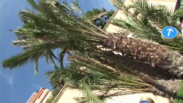 HD: Roadside palms video