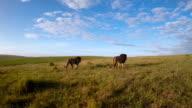 Roaming the grasslands video