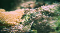 Rock and anemone - HD video