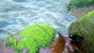 Rocks covered with seaweed video