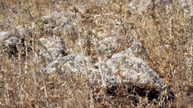 Rocky Field that Once was a Roman Road in Israel video