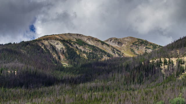 Rocky Mountain Forest - Time Lapse video