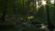 Rocky stream in forest video
