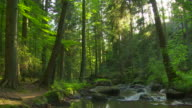 Rocky Stream In Green Forest video