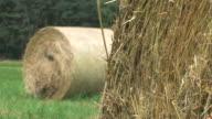 Rolls of hay video