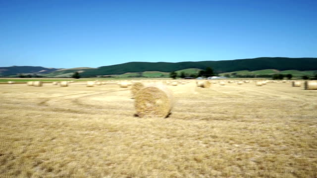 rolls of wheat straw in field of new zealand country video