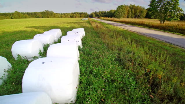 Rolls of white haystack on the side of the road video